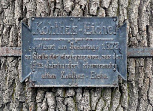 Kohlhas-Eiche