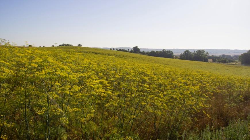 Regionaler Bioanbau