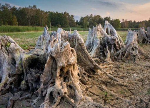 Dürre: ausgetrocknete Seen